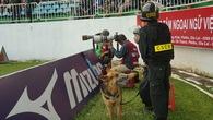 HAGL tăng cường chó nghiệp vụ để đảm bảo an ninh những trận đấu trên sân Pleiku