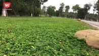 """Khám phá đường chạy """"hoa vàng trên cỏ xanh"""" của Ecopark Marathon"""