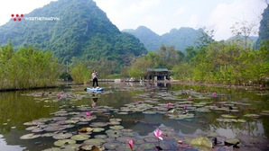 Khám phá rừng hoa súng bằng mái chèo Kayak